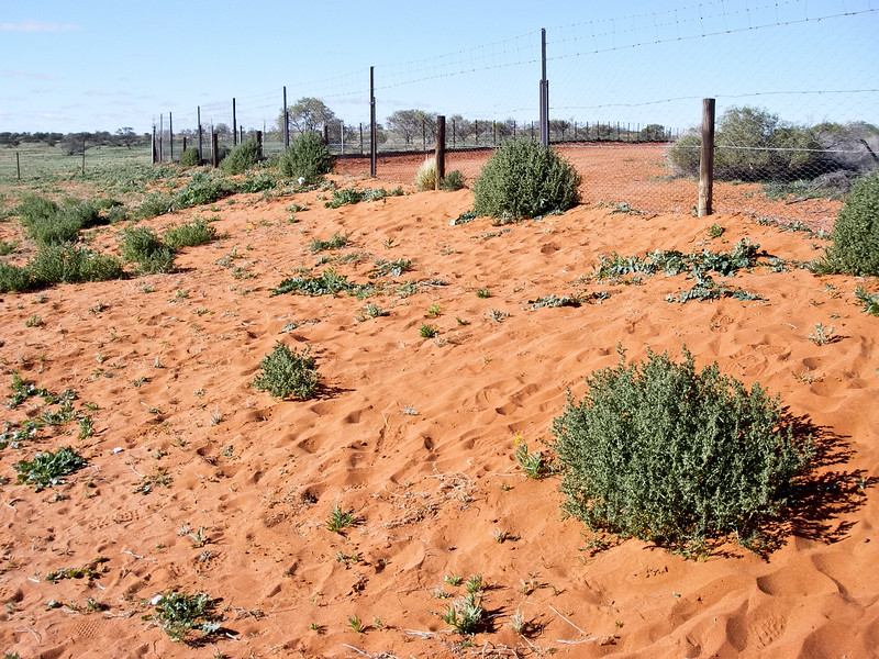 Camerons Corner, State Border and Dingo Fence