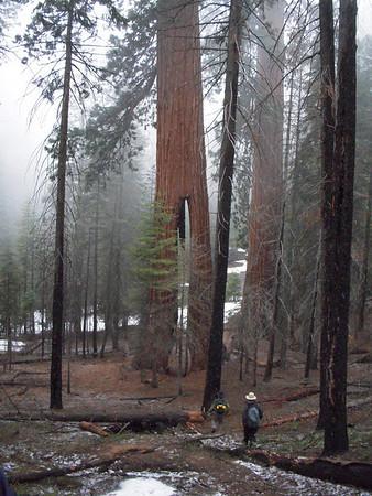 Yosemite May 2010