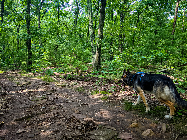 Day one, Buck wanted to go for a hike.