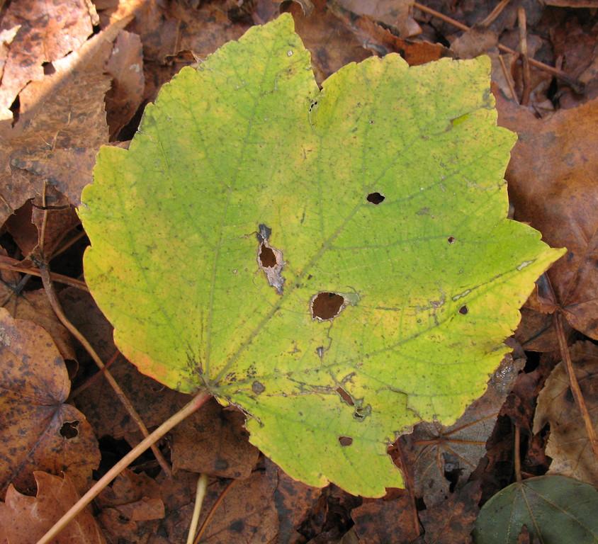 Santee National Wildlife Refuge - November 23, 2006