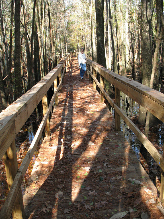 """The lighting is tough in this photo, but it shows the """"trail"""" that we used to get into the cypress swamp. What a delightful walk!<br /> Santee National Wildlife Refuge - November 23, 2006"""