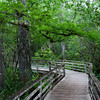 Corkscrew Swamp's boardwalk