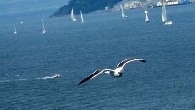 Cruise 2010-07-10 at 08-05-45