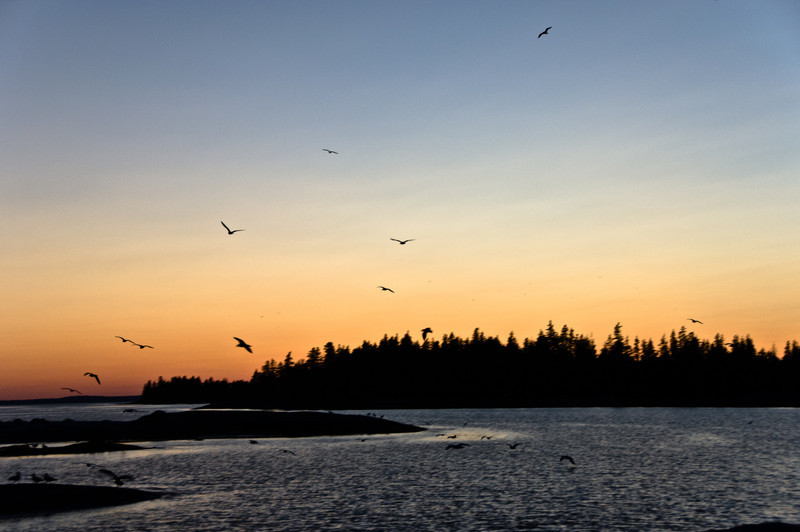Birds flying at Sunset as seen from Wheat Island