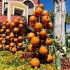 Lots of pumpkins in Downtown Disney