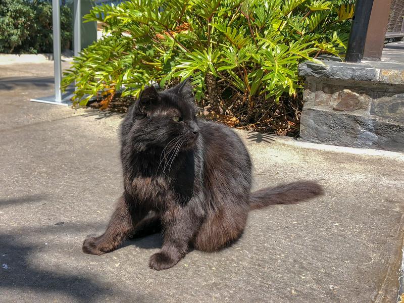 Friendly feral feline outside Trader Sam's