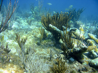 A view across the reef