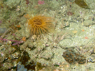 A hydroid on the sea floor.