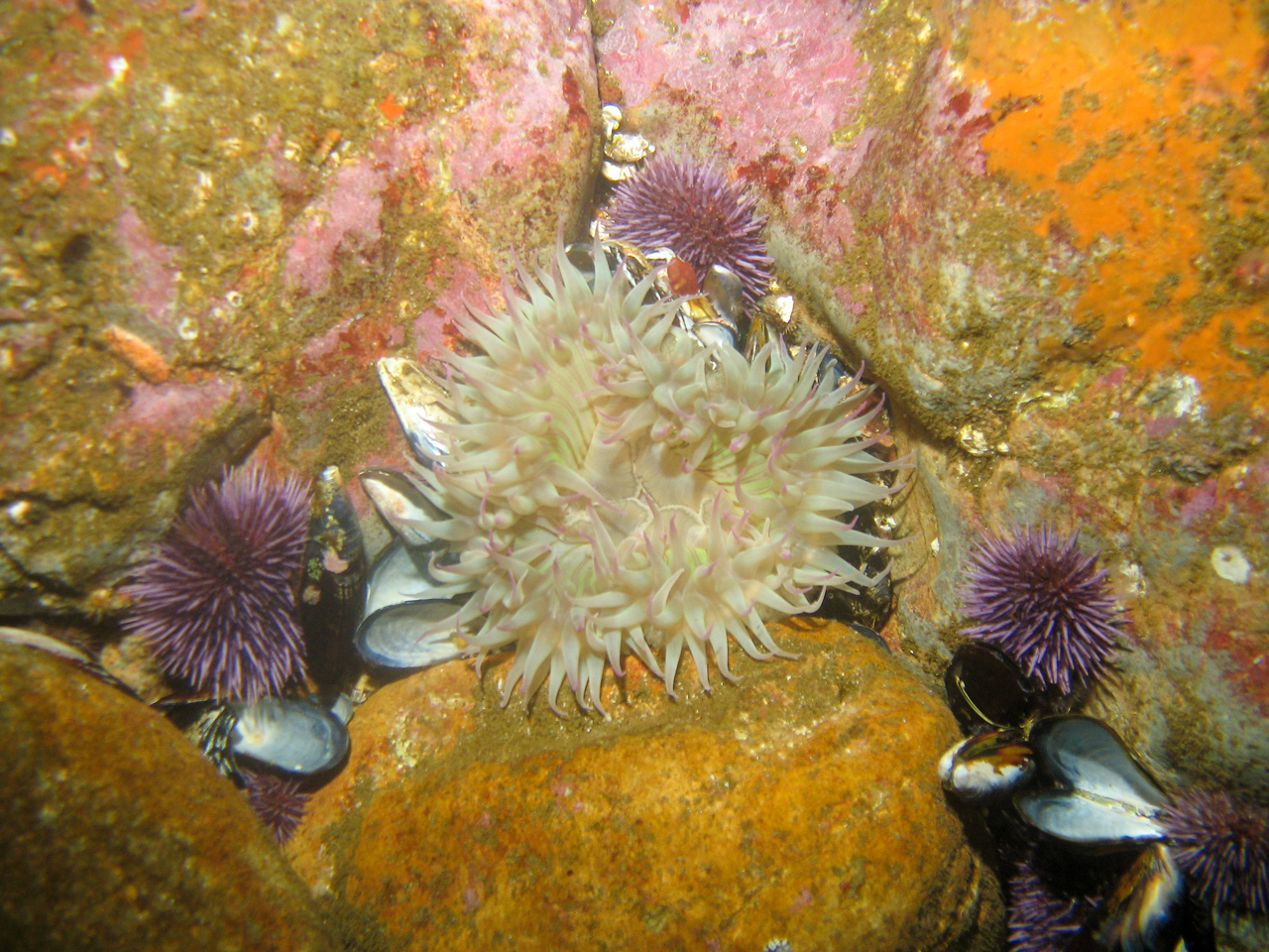 Another anemone.