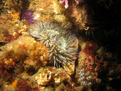 The anemone again.