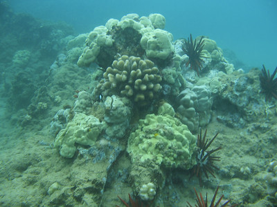 A shallow coral head  while skin diving.