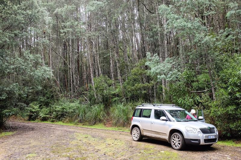 In the Errinundra Rainforest