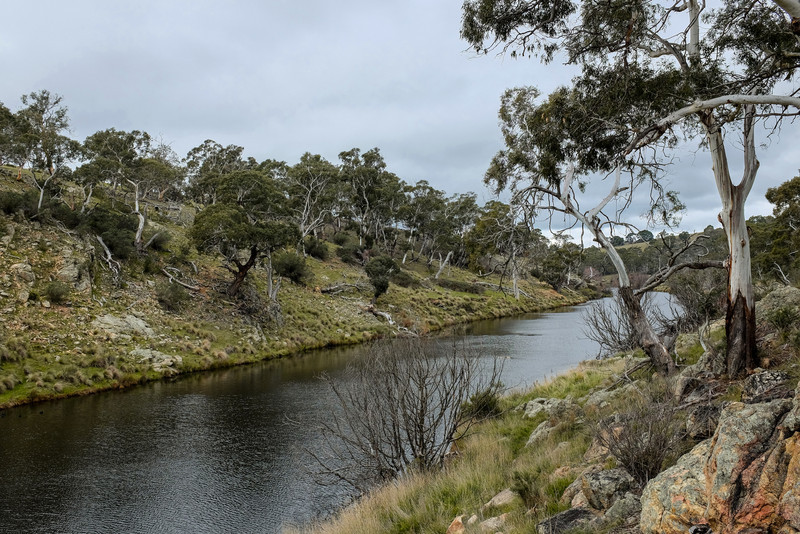 Platypus pool on the Bombala River
