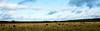 Monaro Plains