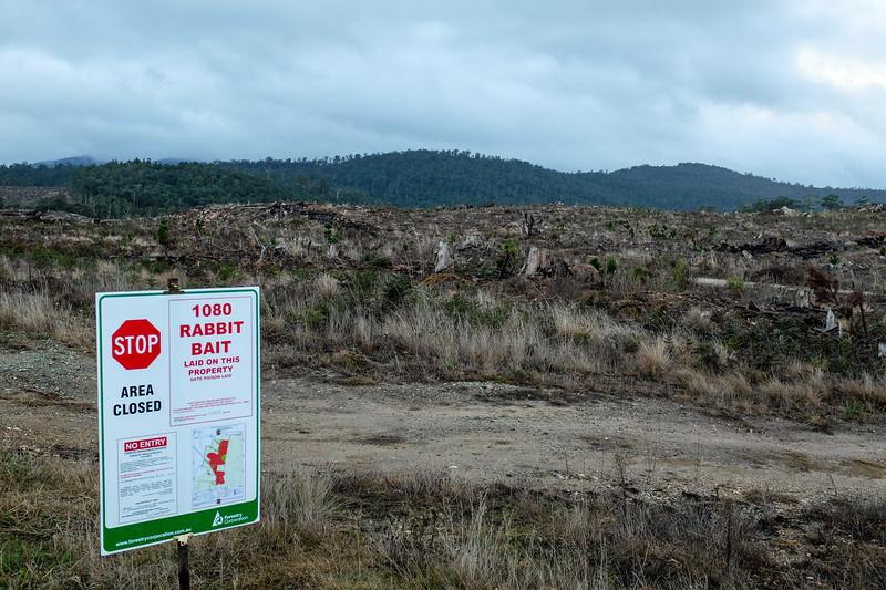 Bombala, Forest Management