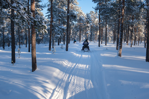 Snowmobiling through the forest