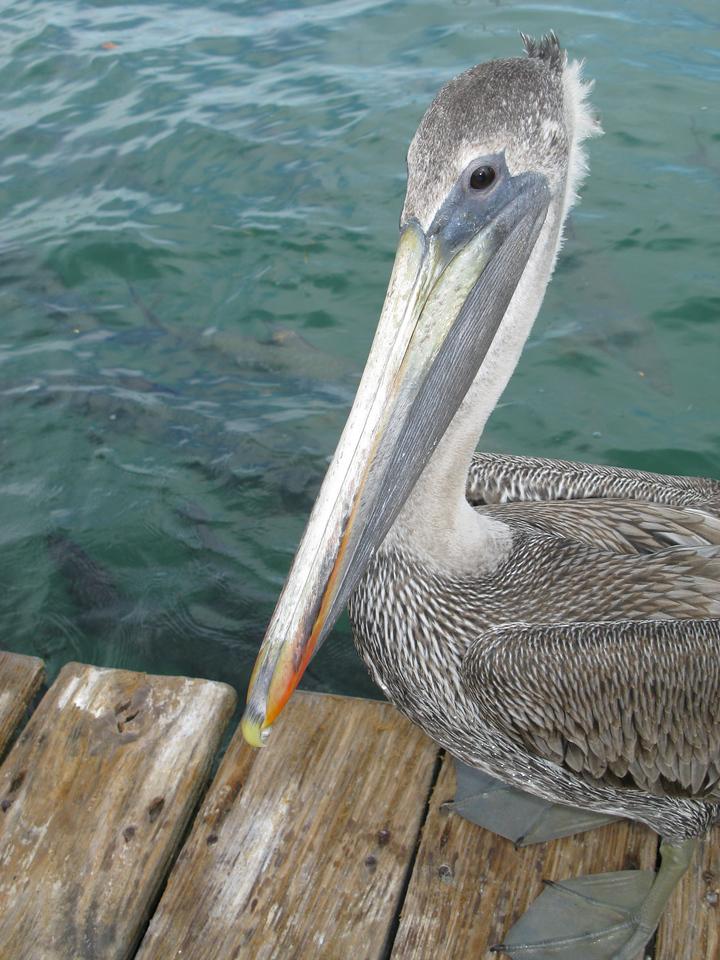 Robbie's of Islamorada<br /> Florida Keys<br /> November 24, 2009