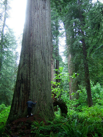 <h3>48. Hugging Trees</h3> <br> O' jungle, provide for me refuge in peace;<br> Giants, perform with your symphonic leaves;<br> Heavens accompany, send me a breeze;<br> Part of me stays in this place<br> As I go.<br> Nothing directly compares;<br> This I know.<br>