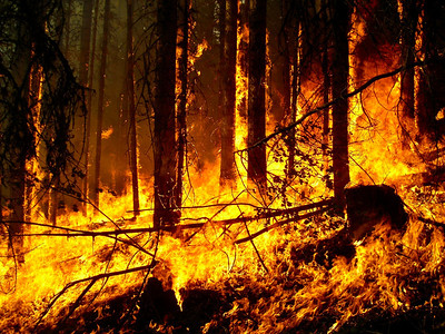 The heart of a forest fire rages as we stand fast just feet away, holding the line against spot fires and slopover.