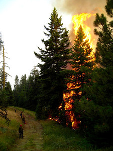 Flames loom high overhead as our dwarfed crew stands ready to extinguish spot fires in the green.