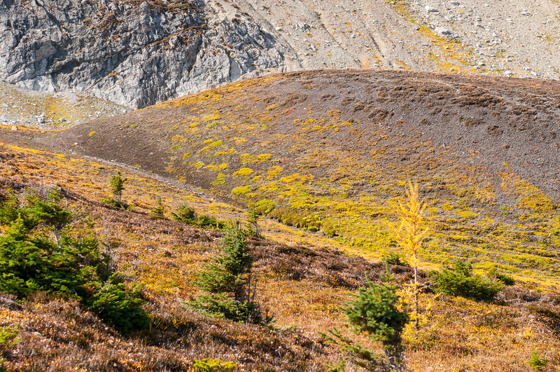 Fall colours in the alpine meadows