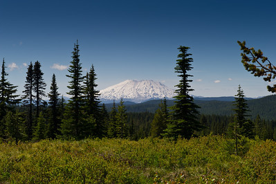 Mt St. Helens from Indian Heaven Wilderness