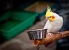 Bird Street  (Photographer: Ron)