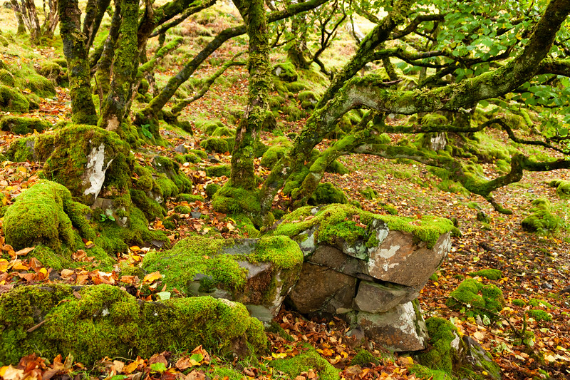 Fairy Glen forest