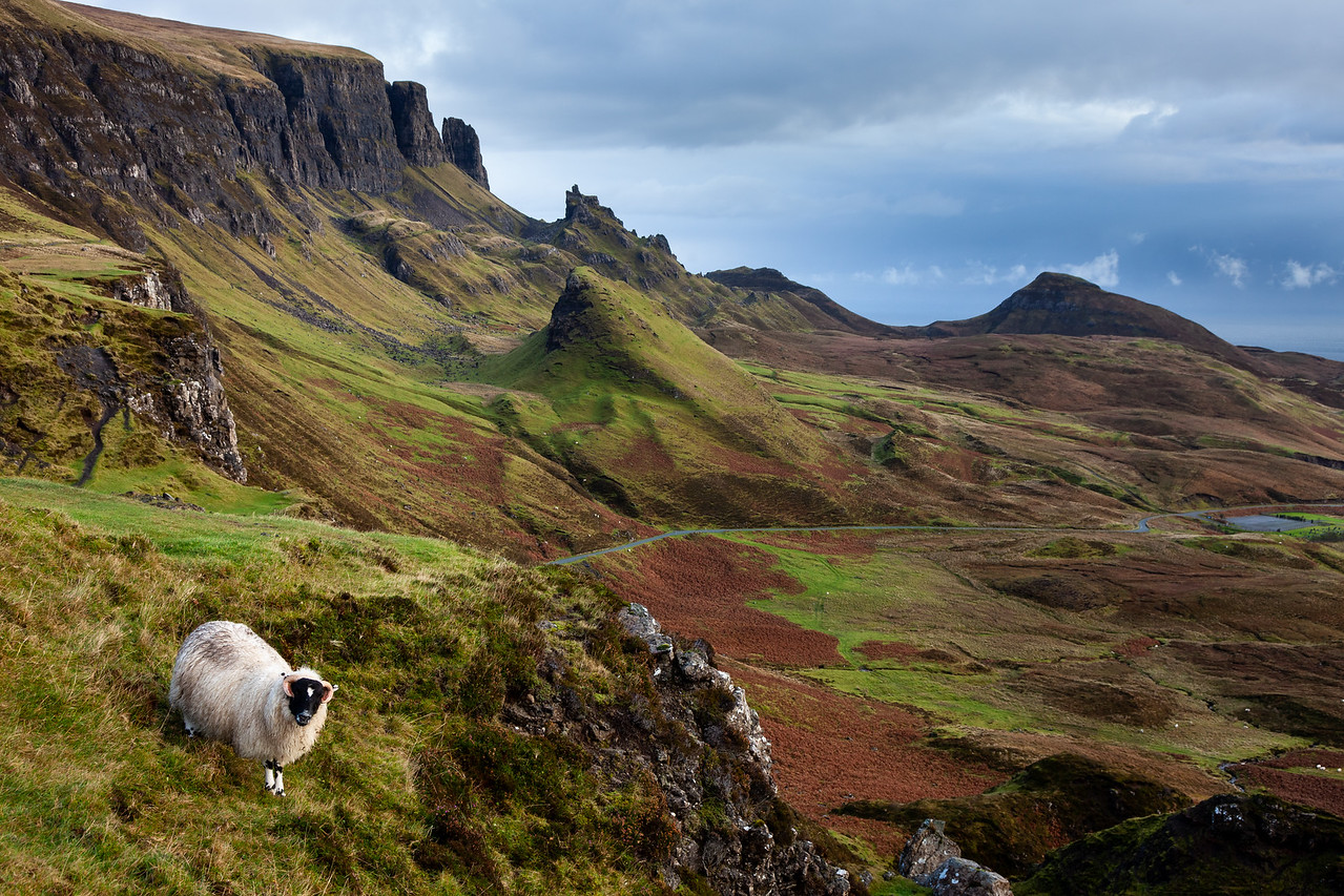 Sheep on the Quiraing
