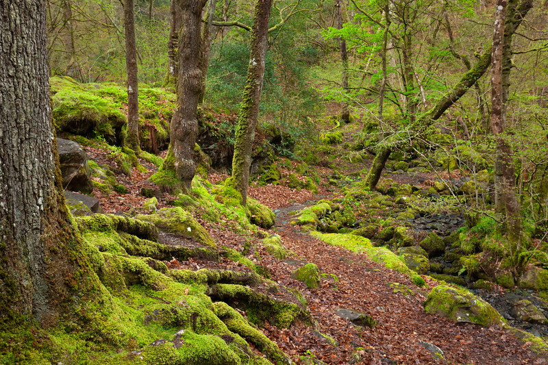 Lodore Forest