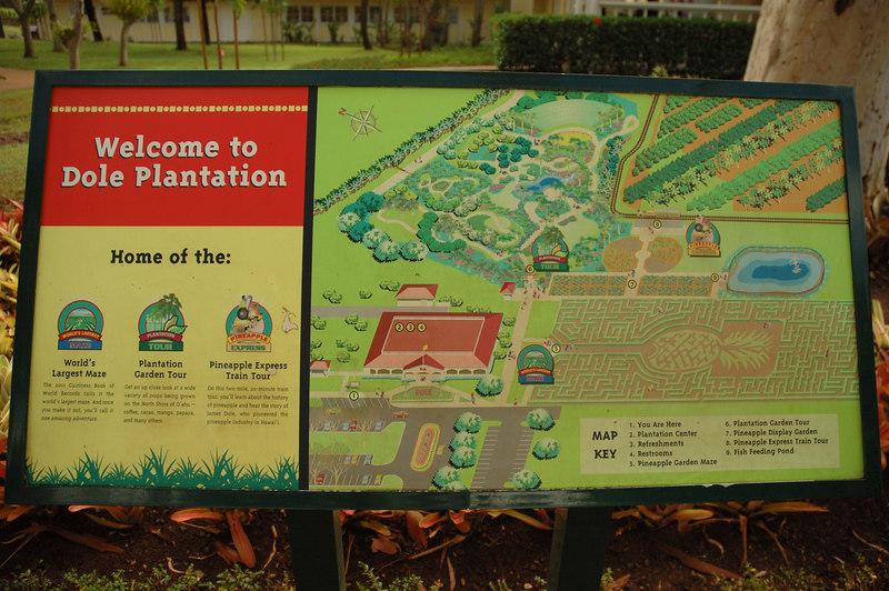A visit to the Dole Plantation