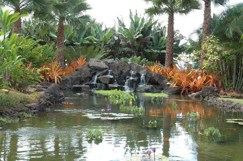 Pond at the Dole Plantation