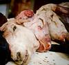 Lamb heads in Mombasa Main Market, Kenya