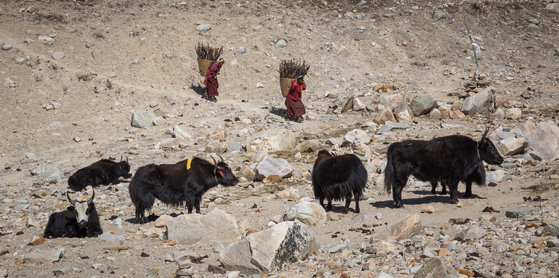 Firewood Baskets and Yaks
