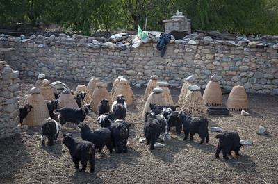 Goats and Stones