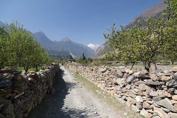 Apple Orchard & Pathway