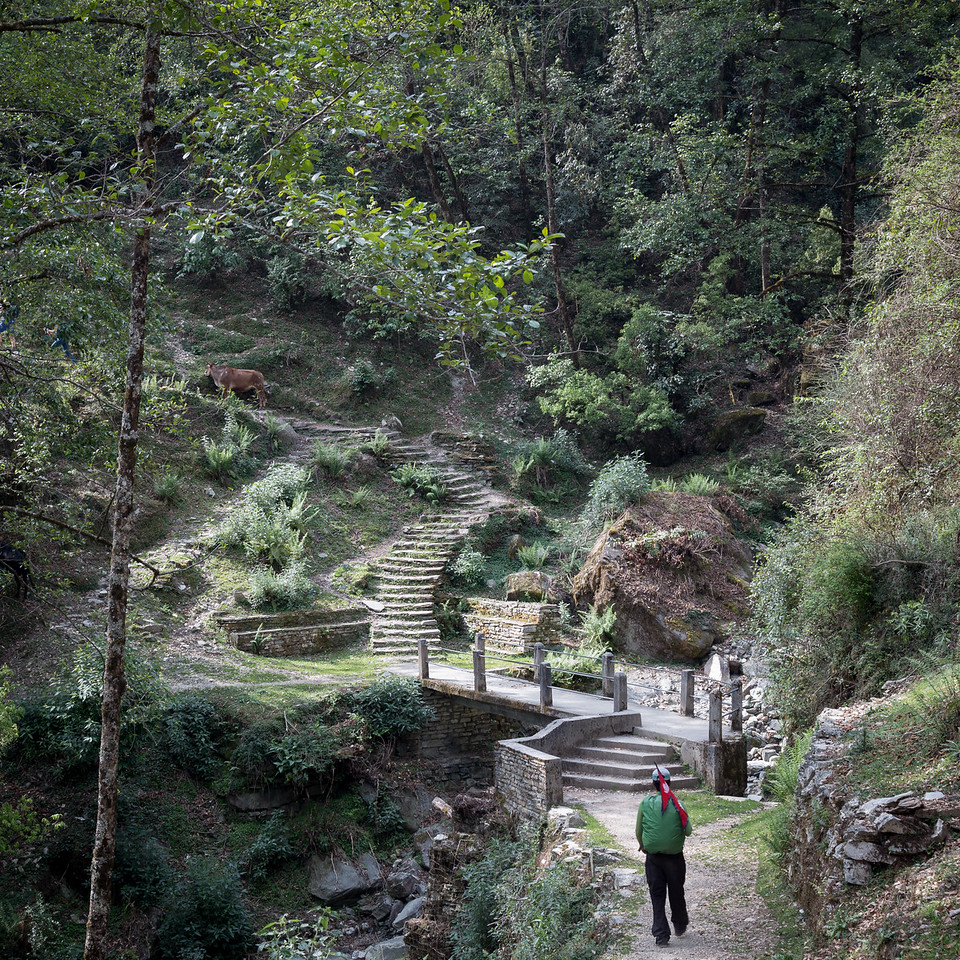 Trail to Ghorepani