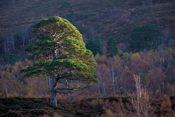 Northwest Highlands of Scotland 2019
