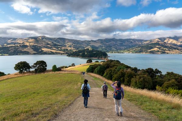 Hiking Onawe Track