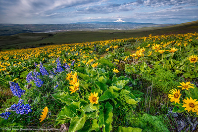Balsam Root and Lupine at Dalles Mtn Ranch