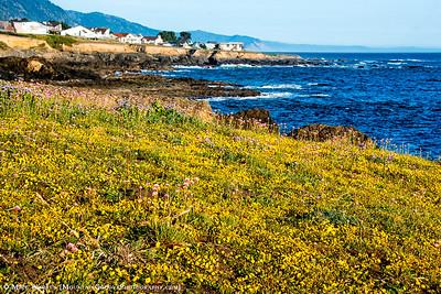 Shelter Cove, CA coast