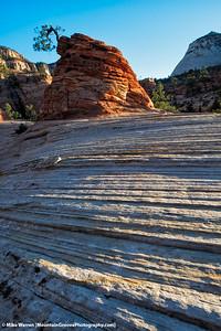 Lone Pinion Tree, Checkerboard Mesa
