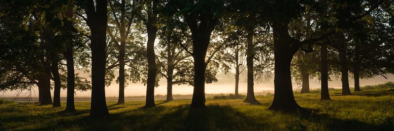 Woodland Pano