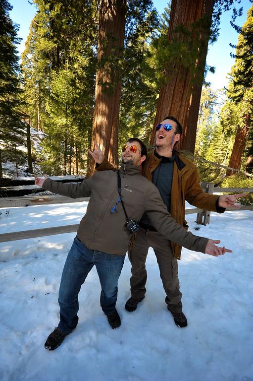 Sequoia 009