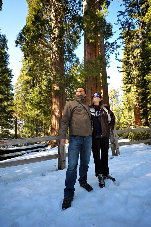 Sequoia 008
