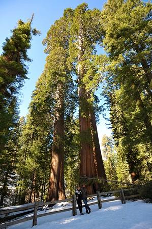 Sequoia 007