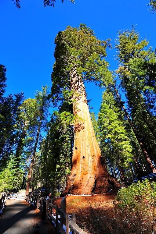 Sequoia 001
