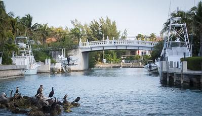 Sail Florida-22