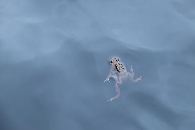 Glencoe Lochan frogs