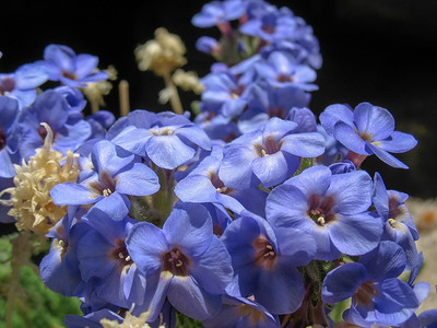 Another name for Polemonium is Jacob's Ladder or Sky Pilot.